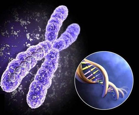 血友病治疗有新突破 猴子产生蛋白质